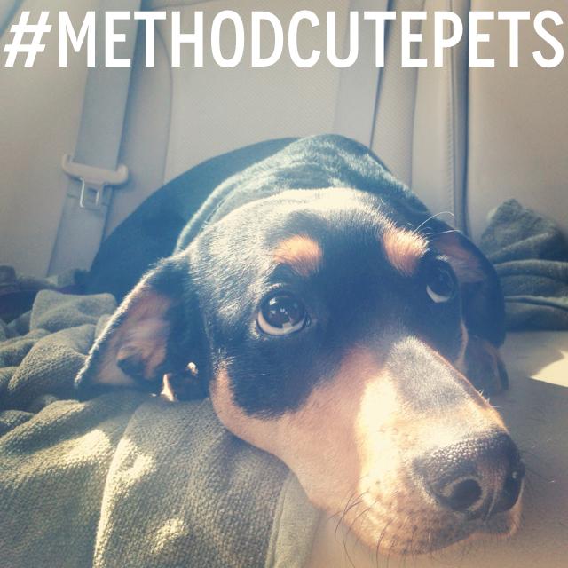 #MethodCutePets Photo Contest