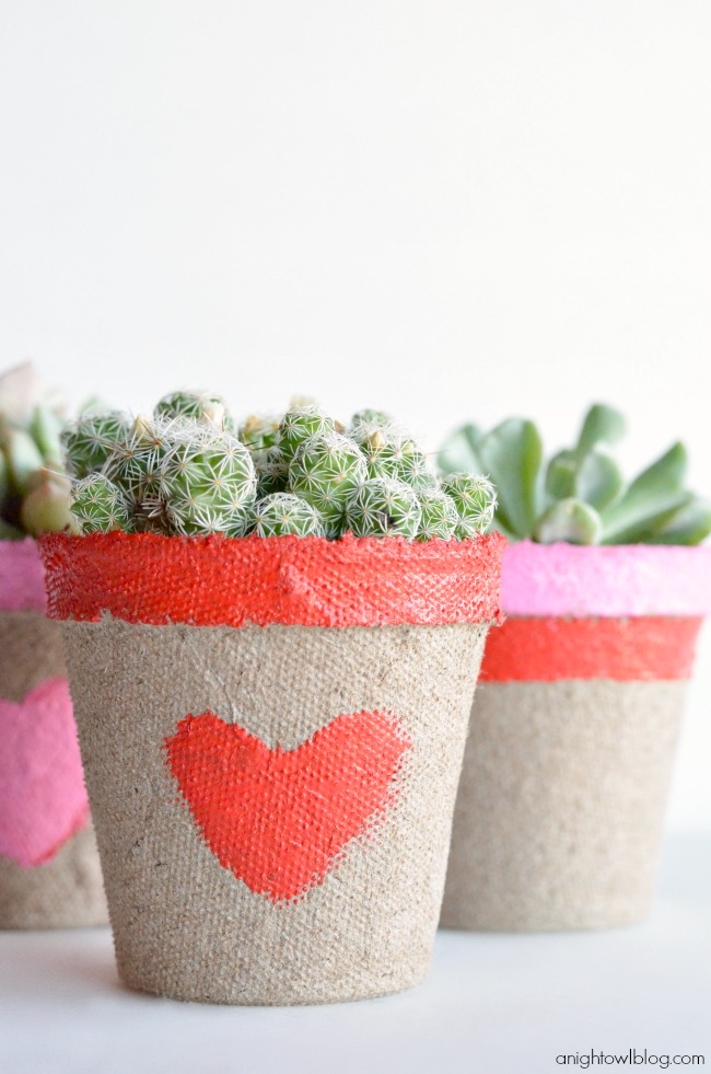 Little succulent plants, what a sweet and easy Valentine's Day gift!